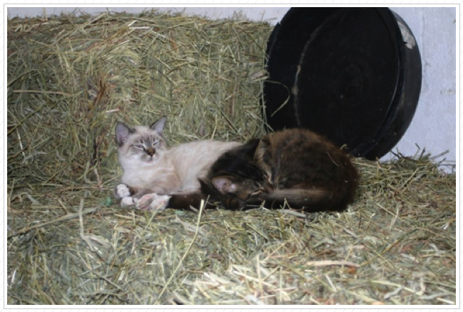 Buttons & Barley in the hay room.